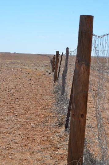 Dog-Fence-5300-km-lang