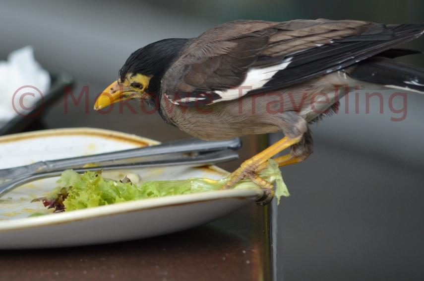 Hirtenmania-mag-keinen-Salat