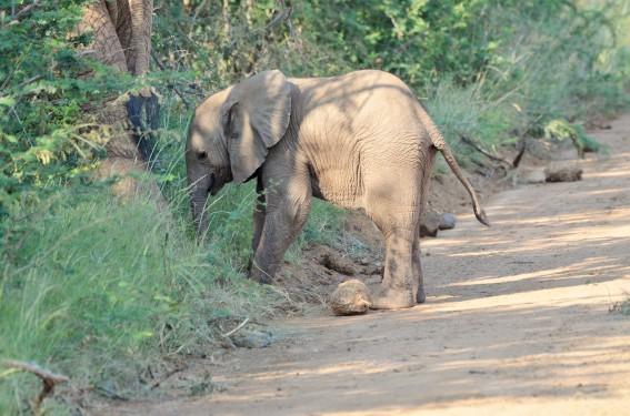 2020-02-Morokolo-Elefant_1546