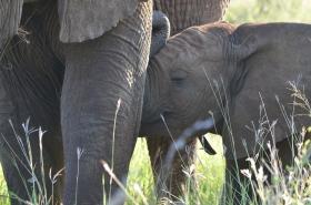2020-02-Morokolo-Elefant_1695