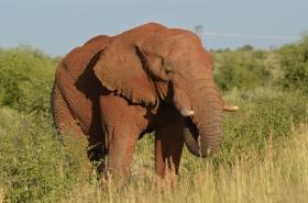 2020-02-Morokolo-Elefant_1804